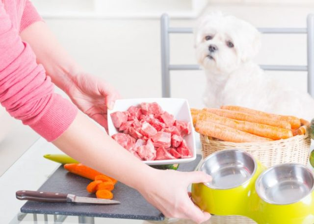 2. Fresh Dog Food Delivery Services Are Customizable For Your Pooch