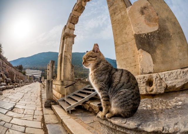 Evolution of Cats in History: Good or Devil
