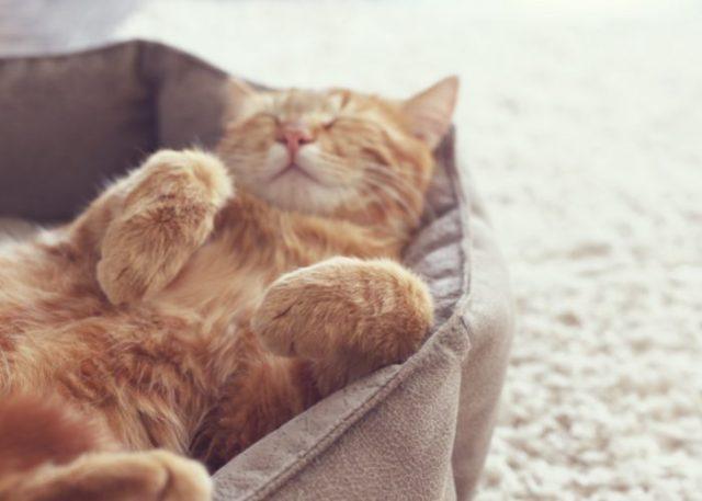 A-meow-zing Pets