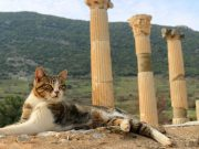 The Evolution of Cats: Knowing Our Favorite Furry Friend