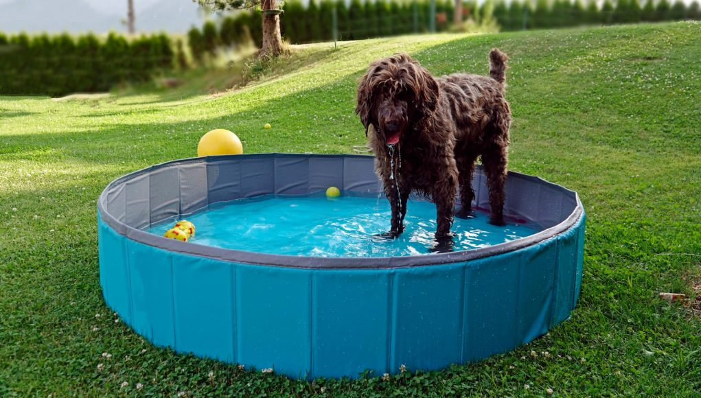 Top 12 Best Dog Pool Choices for Summer