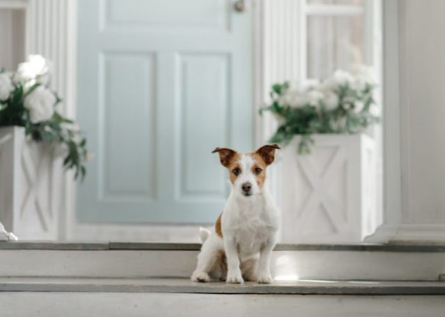 Take your dogs home but don't let them enter your house yet