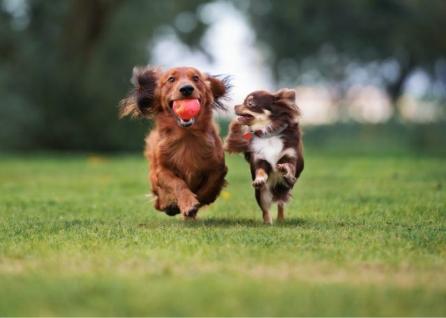 Can you commit to the responsibility of owning more than one dog?