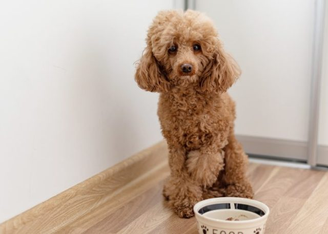 20 Reasons Why Your Dog Won't Eat or Drink: 4. The Dog Dislikes Their Food