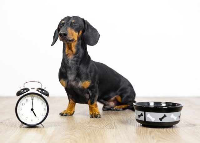 20 Reasons Why Your Dog Won't Eat or Drink: 11. Change in a Dog's Regular Schedule