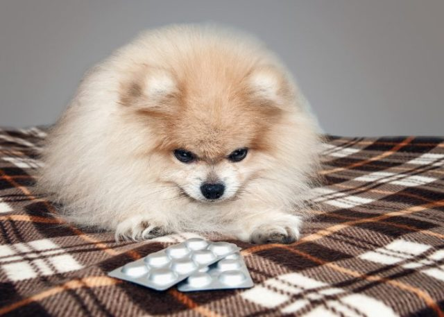 20 Reasons Why Your Dog Won't Eat or Drink: 18. Exposure to Toxins