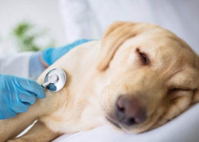 20 Reasons Why Your Dog Won't Eat or Drink: 20. Severe Disease or Illness
