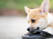 What To Do If Your Dog Swallows Something