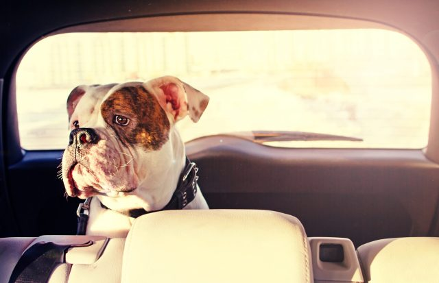 Avoid fetching your new dog with your old dog
