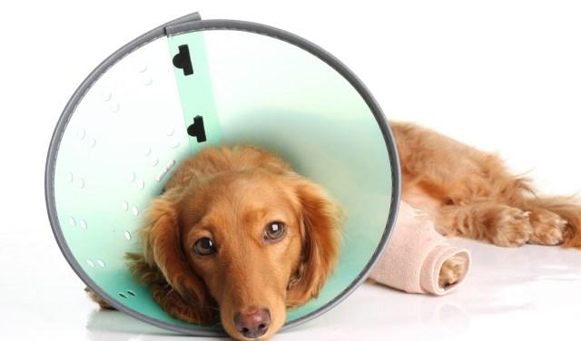 sick and injured dog
