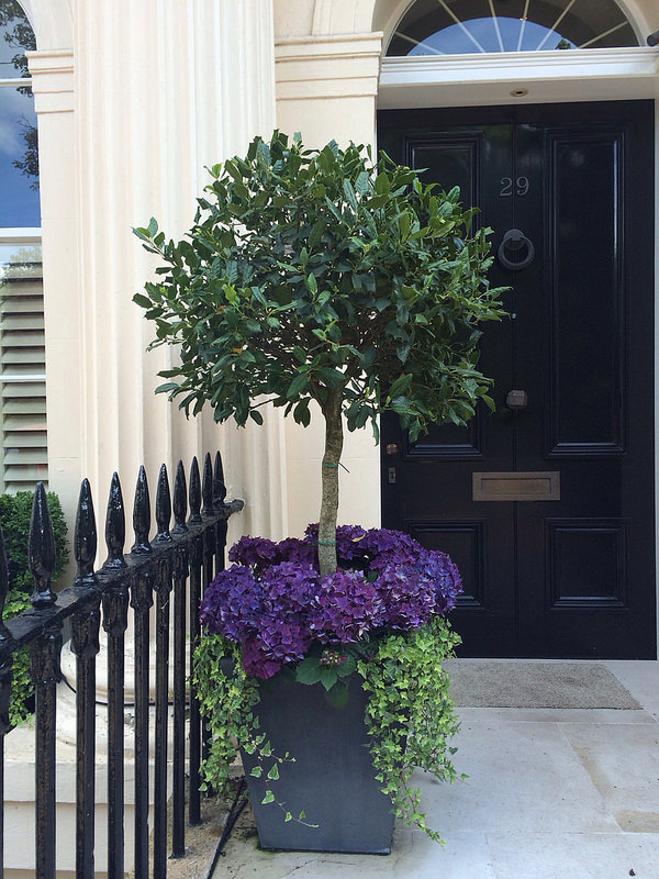 outstanding potted trees that will