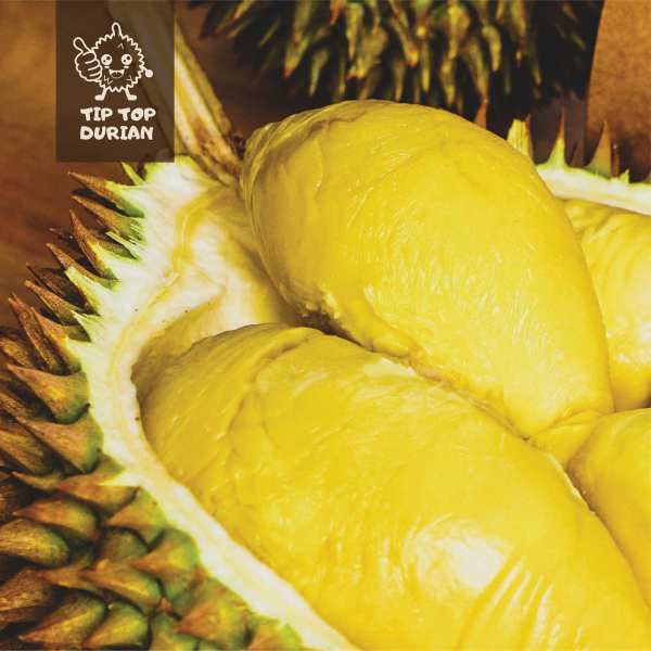 XO Durian | Tip Top Durian Delivery | Malaysia Top Fresh Durian Online Delivery