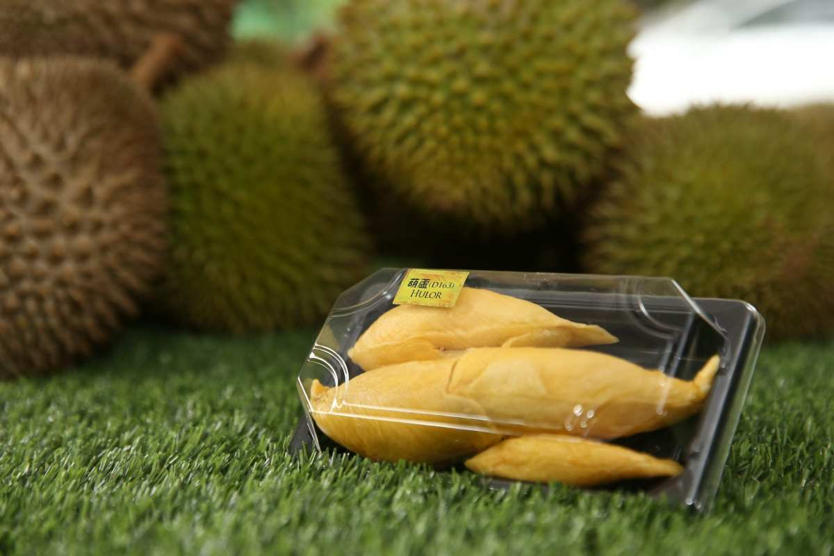 Holor Durian D163   Musang King   D24   Fresh Durian   Durian Ice Cream   Durian Mochi   Durian Crepe Cake   Durian Cheesecake   Tip Top Durian Delivery   Malaysia Top Fresh Durian Online Delivery   Tip Top Durian Delivery   Malaysia Top Fresh Durian Online Delivery