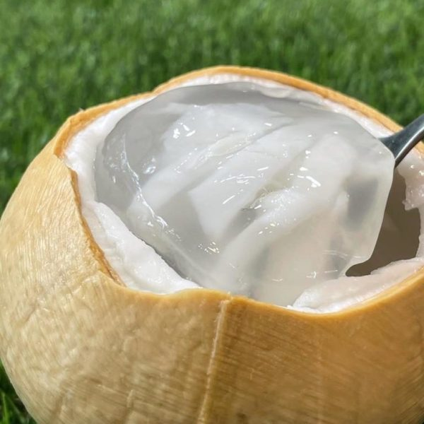 Coconut Jelly 2 | Musang King | D24 | Fresh Durian | Durian Ice Cream | Durian Mochi | Durian Crepe Cake | Durian Cheesecake | Tip Top Durian Delivery | Malaysia Top Fresh Durian Online Delivery