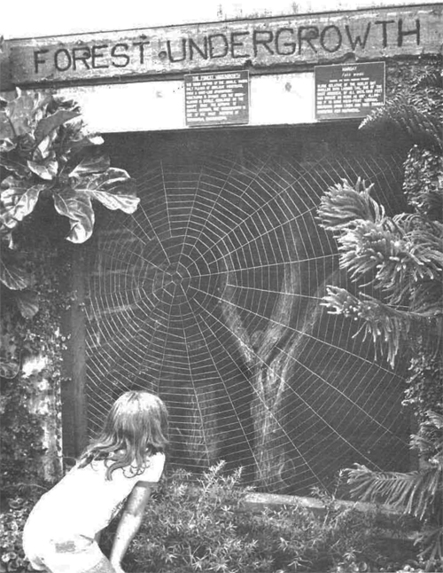 The steel spiderweb originally debuted in the Tropical Rainforest and now resides on the wall of Animals and Man.