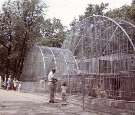 Exhibits evolved over the past several decades as natural habitats and enrichment became focal points.