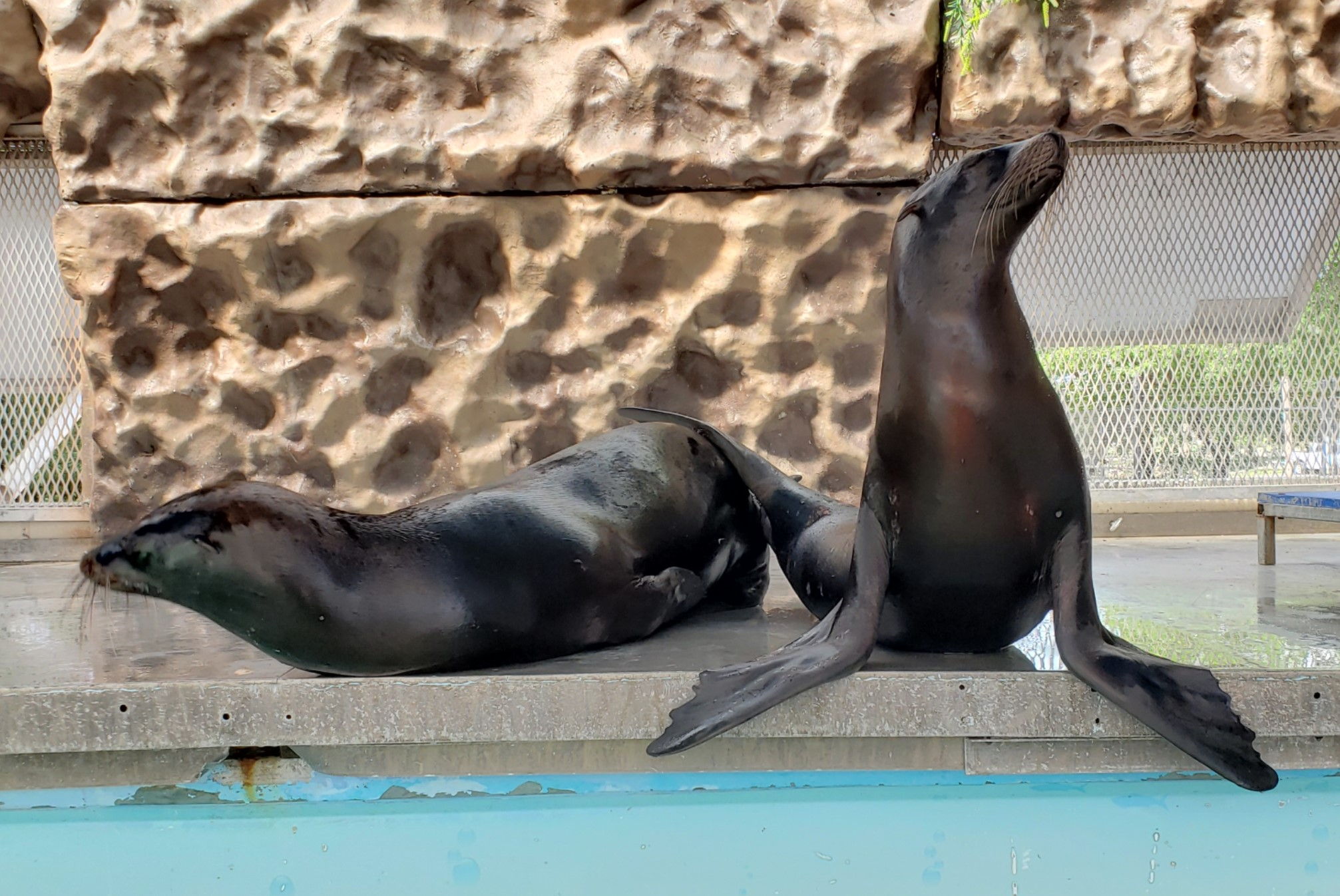 Sea Lion Splash educated and entertained guest in the summer of 2018.