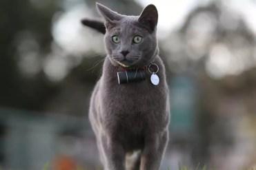 Accesorio Pod 3 en un gato