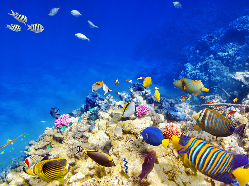38718249 - wonderful and beautiful underwater world with corals and tropical fish.