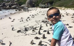 things to do in cape town with kids