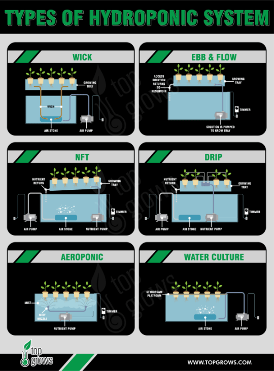 Main Types of Hydroponic Systems - Infographic