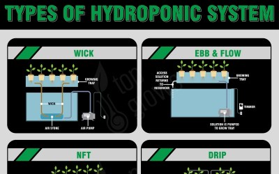 Main Types of Hydroponic Systems – Infographic