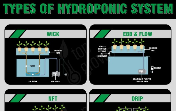 Main Types of Hydroponic Systems