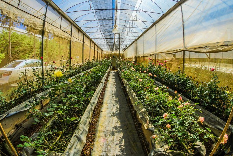 Top Tips For Cleaning Your Greenhouse - Do it at Least Once a Year!