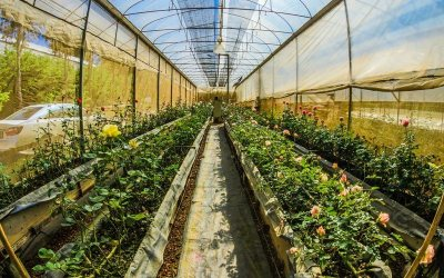 Top Tips For Cleaning Your Greenhouse – Do it at Least Once a Year!