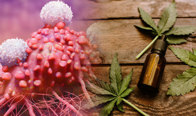 Which is Better For Treating Cancer: THC Oil or CBD Oil?
