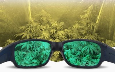Best Grow Room Glasses Reviews – HPS & MH Safety Glasses