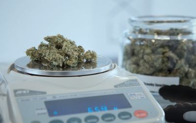 Weed Measurements & Weed Quantities + Weight Conversion Charts