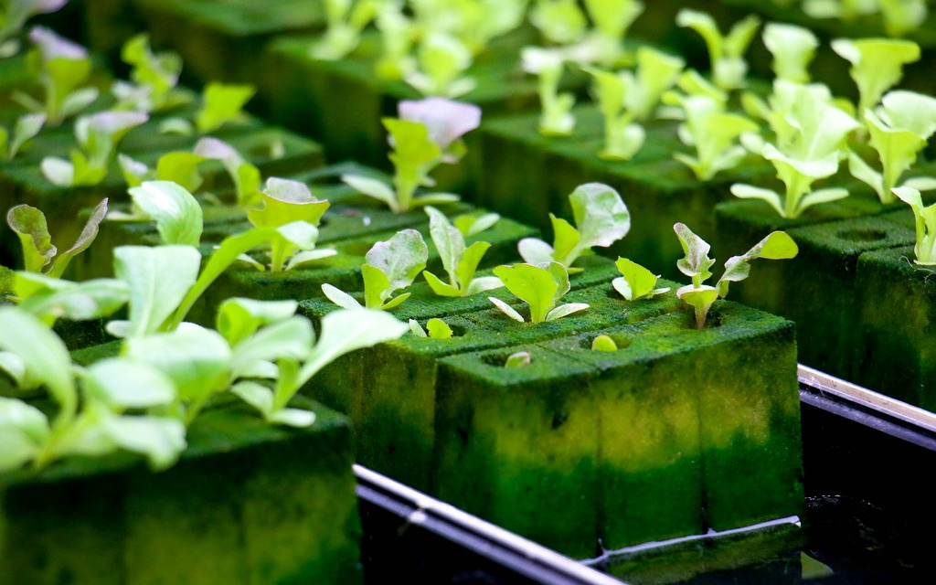 Homegrown: Handmade Hydroponics for All Gardeners