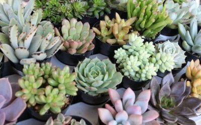 Top 9 Succulent Subscription Box | Choose the Best Succulent Gift Box