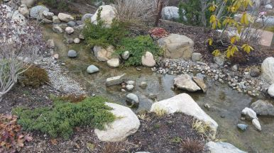 A little stream in the Japanese garden