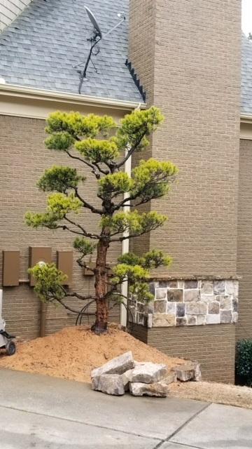 topiary-11
