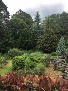 topiary-IMG-1100
