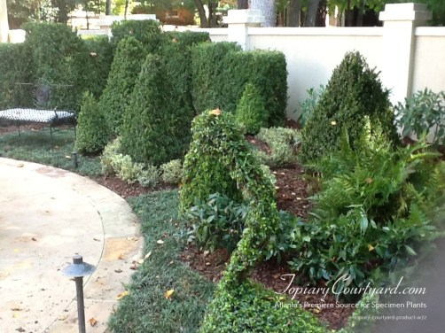 topiary-courtyard-product-w72