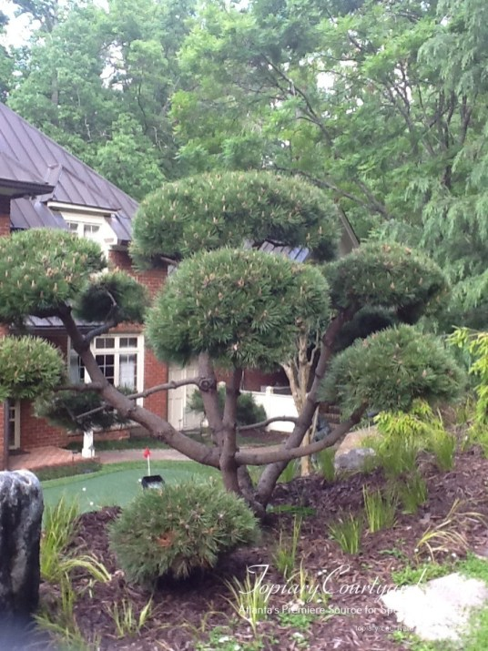 topiary-courtyard-product-w82