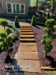 Pom pom boxwoods and obelisk boxwoods directing the path