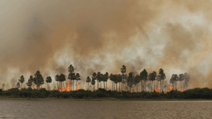 Wildfires in Paraguay's Chaco Rainforest, further proof that the world is on fire
