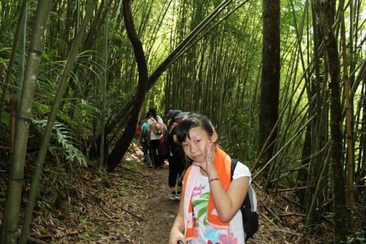 司馬庫斯:在臥虎藏龍的竹林裡
