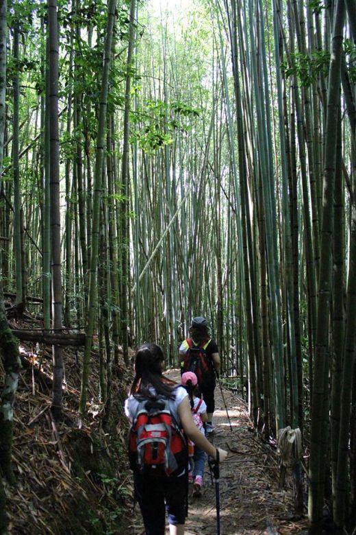 司馬庫斯:迎面而來一片竹林