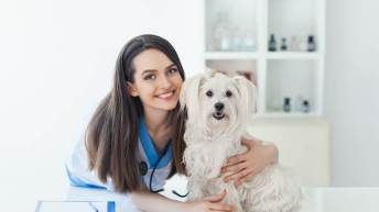 How Pet Insurance Works