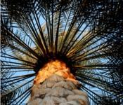 image of muslim like a palm tree