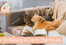 How To Raising A Cat In The House