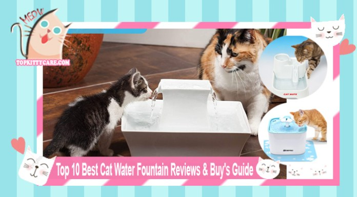 Top 10 Best Cat Water Fountain Reviews & Buy's Guide