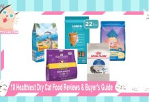 10 Healthiest Dry Cat Food Reviews & Buyer's Guide