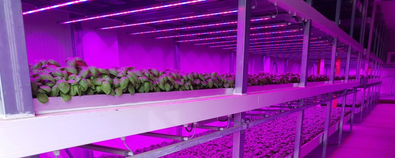 LED Grow lights Plants Light