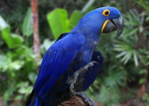 Top 10 Most Expensive Birds